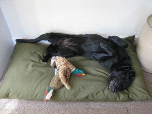 SLIMLINE Dog Bed NEST