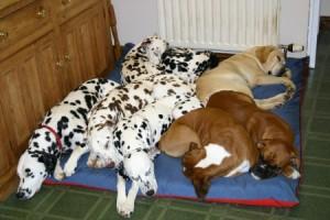 JUMBO Dog Bed NEST