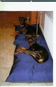 LARGE Dog Bed NEST