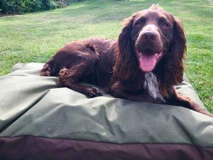 MEDIUM Dog Bed NEST